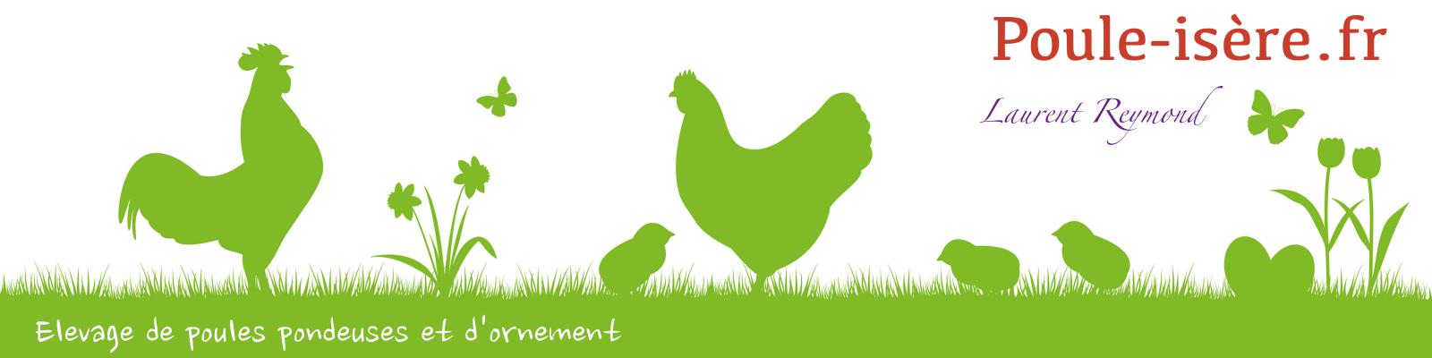 Les poules pondeuses poule is re for Poules d ornement pour le jardin ou la basse cour